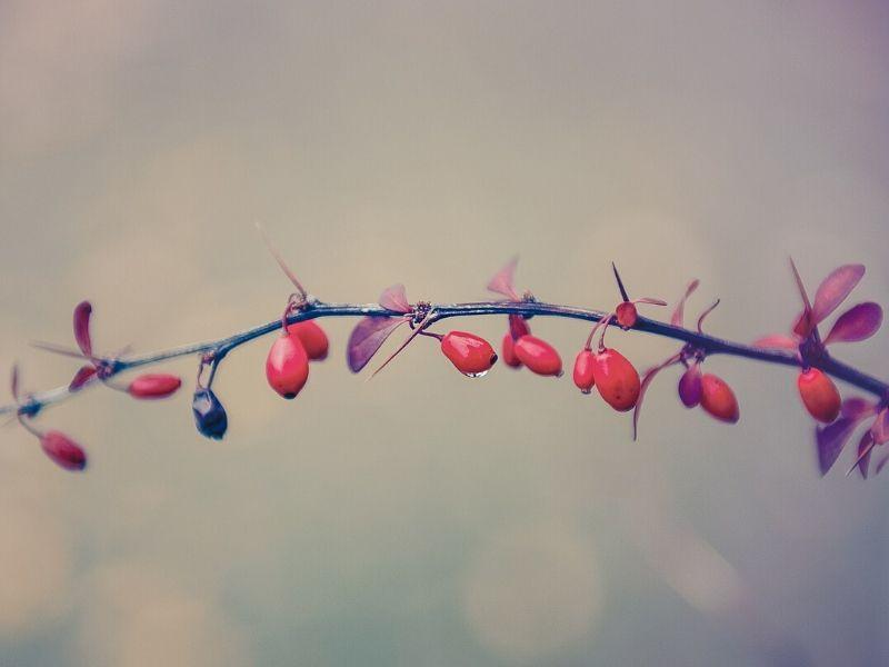 Vorteile und Nachteile einer Psychotherapie