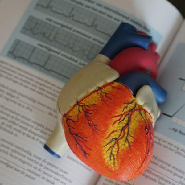 Organspenden - ja oder nein?